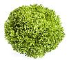 Экспедишн - семена салата тип Саланова дражирование 1 000 семян, Rijk Zwaan