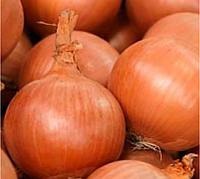БАНКО - лук репчатый, Syngenta 250 000 семян