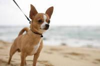 Поводок-рулетка для собак весом до 15кг