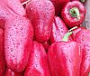 ЛЮБОВ F1 - насіння перцю солодкого, 500 насіння, Syngenta