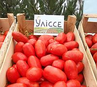 УЛІССІ F1 - насіння томату детермінантного, 2500 насінин, Syngenta, фото 1