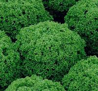 АЛЕППО - семена салата тип Лолла Бионда дражированные, 1 000 семян, Rijk Zwaan, фото 1