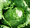 АРГЕНТИНАС - семена салата тип Айсберг дражированные, 1 000 семян, Rijk Zwaan