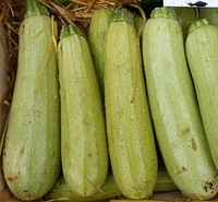 АНГЕЛИНА F1 - семена кабачка, 500 семян, Syngenta, фото 1