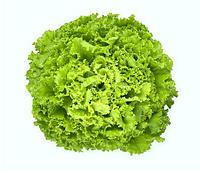 ИМЕДЖИНЕЙШН - семена салата тип Батавия дражированные, 1 000 семян, Rijk Zwaan, фото 1