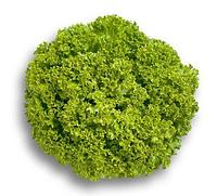 ЛЕВИСТРО - семена салата тип Лолла Бионда дражированные, 1 000 семян, Rijk Zwaan, фото 1