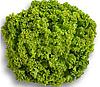 ЛОКАРНО - семена салата тип Лолло Бионда, 1 000 семян, Rijk Zwaan