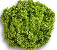ЛОКАРНО - семена салата тип Лолло Бионда, 1 000 семян, Rijk Zwaan, фото 1