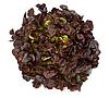 МУРАЙ - семена салата тип Дуболистный дражированные, 1 000 семян, Rijk Zwaan