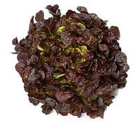 МУРАЙ - семена салата тип Дуболистный дражированные, 1 000 семян, Rijk Zwaan, фото 1