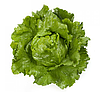 САНТАРИНАС - семена салата тип Айсберг дражированные, 1 000 семян, Rijk Zwaan