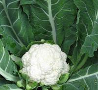 МАЙБАХ F1 - насіння капусти цвітної, CLAUSE 1000 насінин