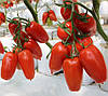 АЙДАР F1  - семена томата, CLAUSE 250 семян