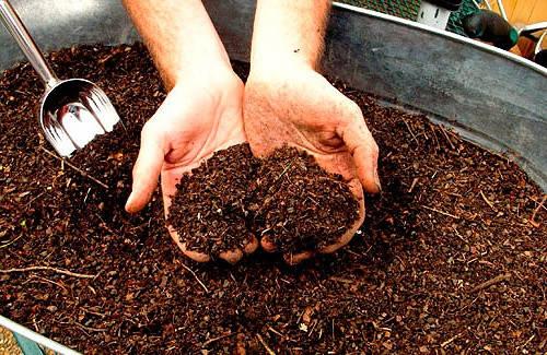 Органические удобрения для цветов: виды и применение
