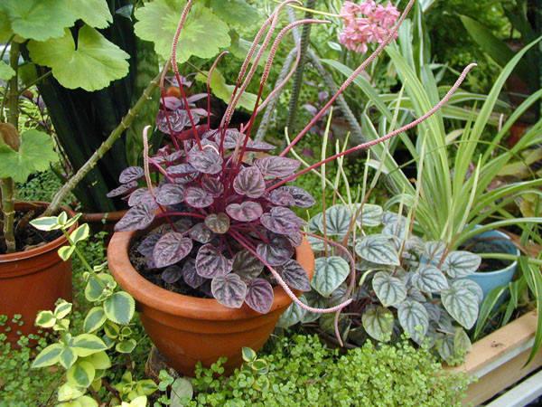 Удобрения для комнатных растений: как разобраться в химическом составе?