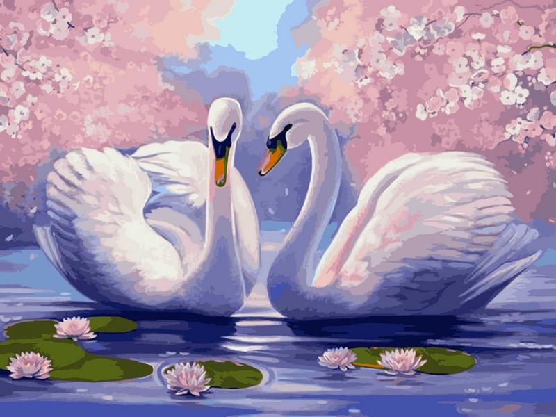 Раскраска по номерам Лебединая верность