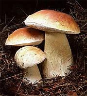 Мицелий (грибница) БЕЛОГО ГРИБА ЕЛОВОГО маточный зерновой биологически высушеный
