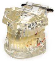 Модель обучающая хирургическая (имплант)