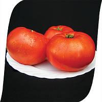 Томат Мирсини F1/ Mirsini F1 Seminis 1000 семян, фото 1