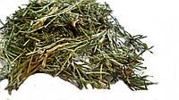 Хвощ полевой (Equisetum palustre), трава 100 грамм