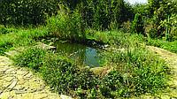 Создание садовых прудов (050) 395-35-71
