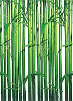 Фотообои на стену Бамбук Код: 421
