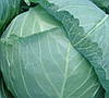 ГЕЛИОС F1 - семена капусты, Moravoseed