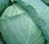 ГЕЛИОС F1 - семена капусты, Moravoseed, фото 1