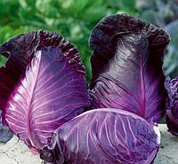 Калибос  семена капусты к/к среднепоздней , фото 1