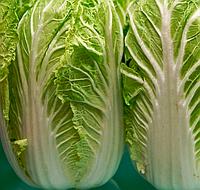 ФОРКО F1 - семена капусты, Moravoseed, фото 1