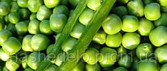Семена гороха Тиара 1 кг Ларк Сидз