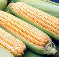 Андриа F1 семена кукурузы сладкой, фото 1