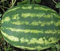 МЭДИСОН F1 - семена арбуза 1 000 семян, CLAUSE