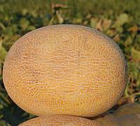 КАРАМЕЛЬ F1  - семена дыни 1 000 семян, CLAUSE