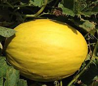 БАБОР F1 - семена дыни 1 000 семян, CLAUSE