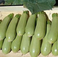 АСМА F1  - семена кабачка 500 семян, CLAUSE
