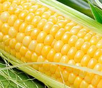 ЛЕНДМАРК F1  - семена сладкой кукурузы 1 кг, CLAUSE