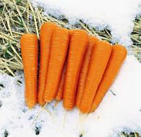 МАЙОР F1  - семена моркови  25 000 семян, CLAUSE