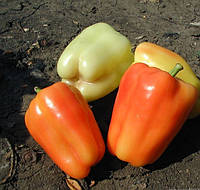 ФЛАМИНГО F1  - семена сладкого перца  5 грамм, CLAUSE