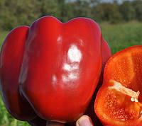 КАРИСМА F1  - семена сладкого перца  1 000 семян, CLAUSE