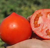 СУПЕРНОВА F1 - семена томата детерминантного 1 000 семян, CLAUSE