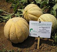 СУПЕРСТАР F1 - семена дыни, 10 грамм, CLAUSE, фото 1