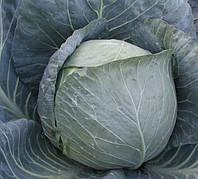 БРАВО F1  - семена капусты белокочанной, 2 500 семян, CLAUSE, фото 1