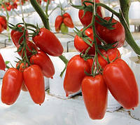 АЙДАР F1  - семена томата индетерминантного 250 семян, CLAUSE