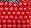 ХИЛМА F1  - семена томата индетерминантного, 250 семян, CLAUSE