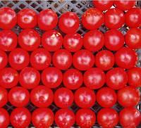ХИЛМА F1  - семена томата индетерминантного, 250 семян, CLAUSE, фото 1