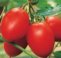КОЛИБРИ F1 - семена томата индетерминантного, 250 семян, CLAUSE, фото 1