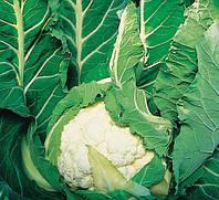 АВИЗО F1 - семена капусты цветной, 1 000 семян, CLAUSE, фото 1