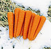 МАЙОР F1  - семена моркови, 25 000 семян, CLAUSE