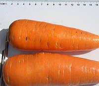 ШАНТАНЕ  - семена моркови,  500 грамм, CLAUSE, фото 1